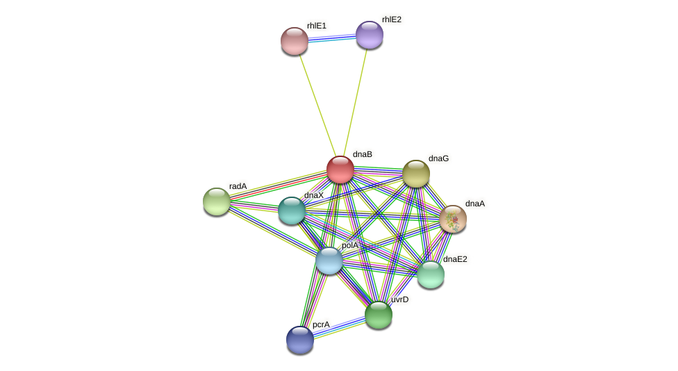 dnaB protein (Xanthomonas campestris campestris) - STRING interaction network