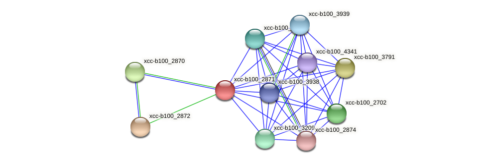 XCC1427 protein (Xanthomonas campestris campestris) - STRING interaction network