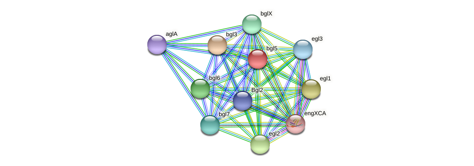 bgl5 protein (Xanthomonas campestris campestris) - STRING interaction network