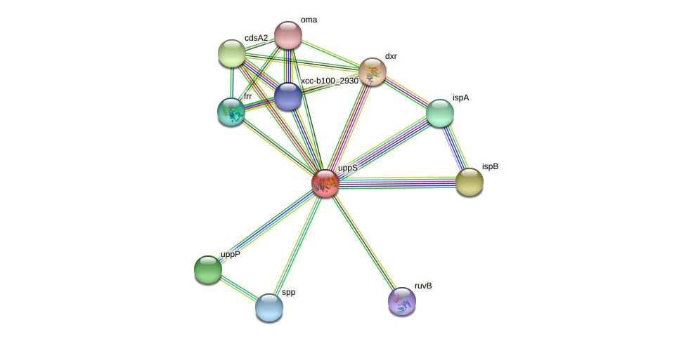 uppS protein (Xanthomonas campestris campestris) - STRING interaction network
