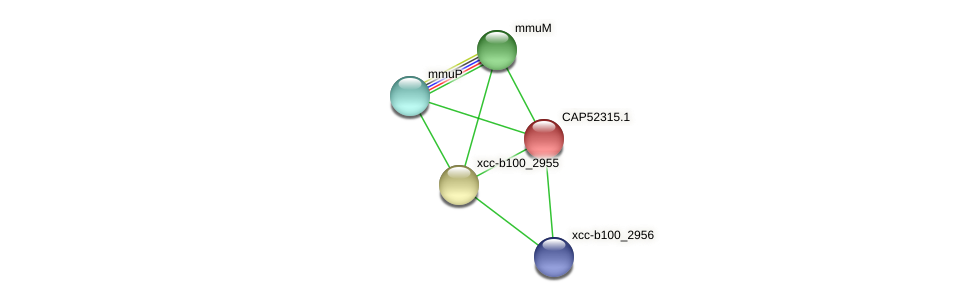 CAP52315.1 protein (Xanthomonas campestris campestris) - STRING interaction network
