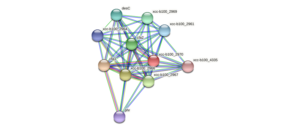 XCC1327 protein (Xanthomonas campestris campestris) - STRING interaction network
