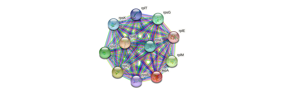 lepA protein (Xanthomonas campestris campestris) - STRING interaction network