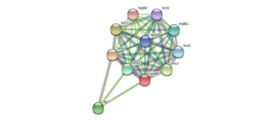 hrpB5 protein (Xanthomonas campestris campestris) - STRING interaction network