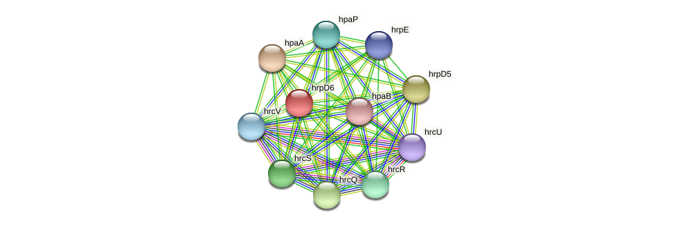 hrpD6 protein (Xanthomonas campestris campestris) - STRING interaction network