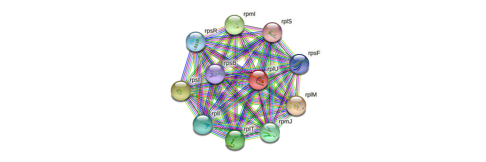 rplU protein (Xanthomonas campestris campestris) - STRING interaction network