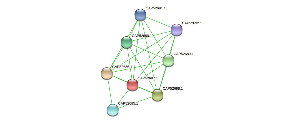 CAP52687.1 protein (Xanthomonas campestris campestris) - STRING interaction network