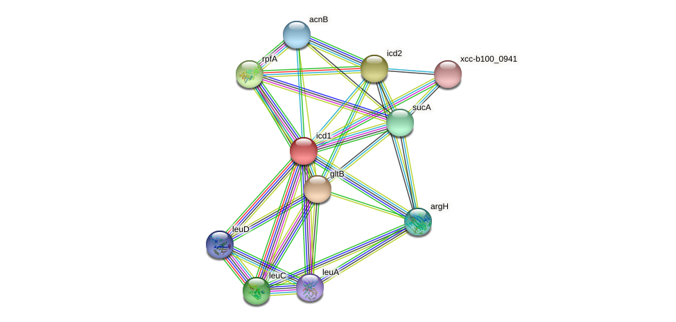 icd1 protein (Xanthomonas campestris campestris) - STRING interaction network
