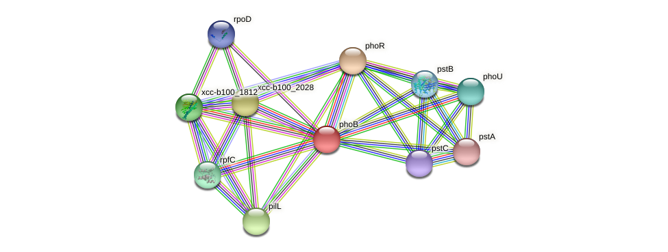 phoB protein (Xanthomonas campestris campestris) - STRING interaction network