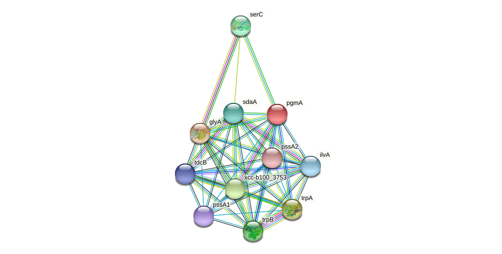 pgmA protein (Xanthomonas campestris campestris) - STRING interaction network