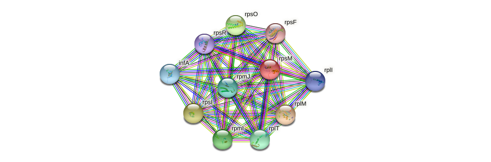 rpsM protein (Xanthomonas campestris campestris) - STRING interaction network