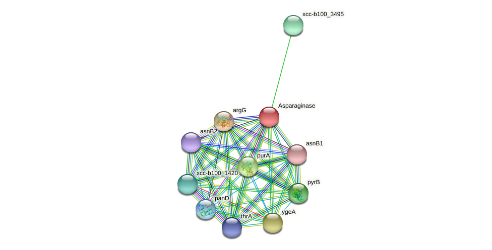 XCC0856 protein (Xanthomonas campestris campestris) - STRING interaction network