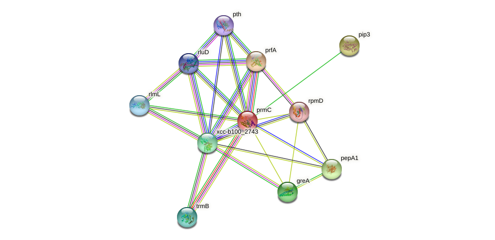 prmC protein (Xanthomonas campestris campestris) - STRING interaction network