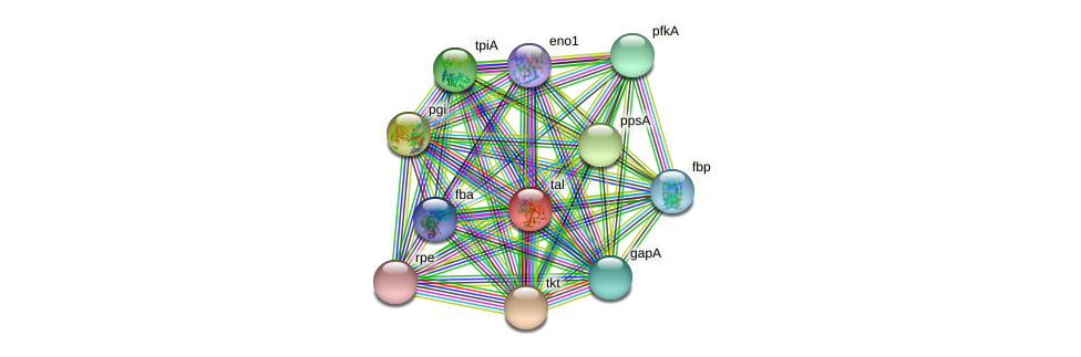 tal protein (Xanthomonas campestris campestris) - STRING interaction network