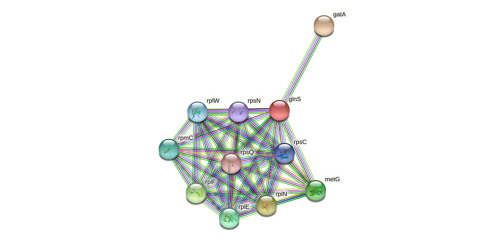 glnS protein (Xanthomonas campestris campestris) - STRING interaction network