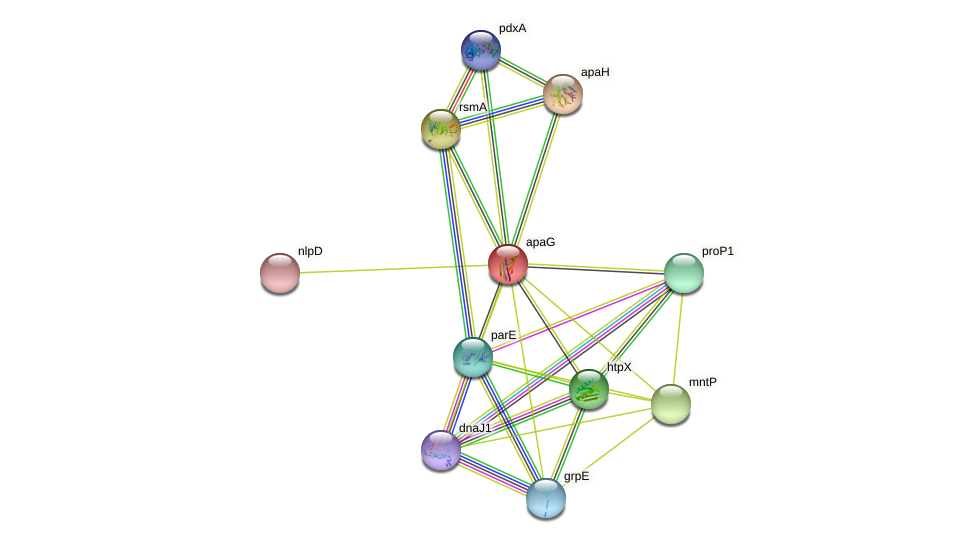 apaG protein (Xanthomonas campestris campestris) - STRING interaction network