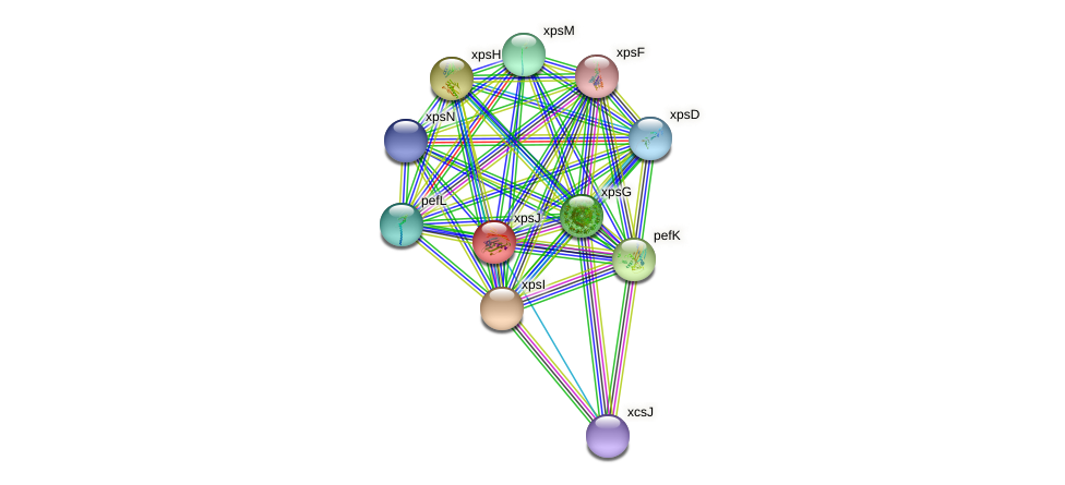 xpsJ protein (Xanthomonas campestris campestris) - STRING interaction network