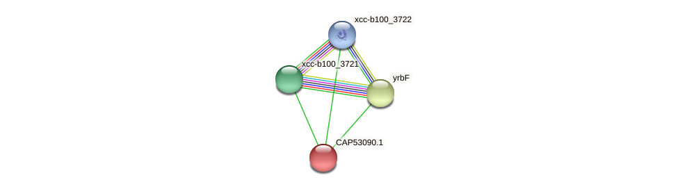 CAP53090.1 protein (Xanthomonas campestris campestris) - STRING interaction network