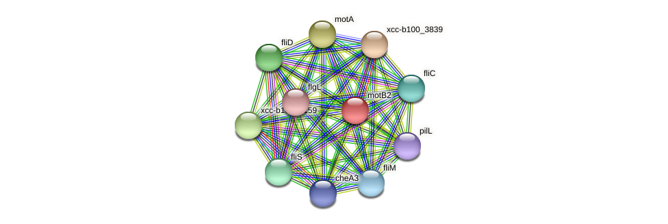 motB2 protein (Xanthomonas campestris campestris) - STRING interaction network