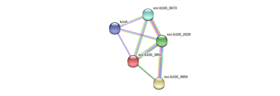 XCC3669 protein (Xanthomonas campestris campestris) - STRING interaction network