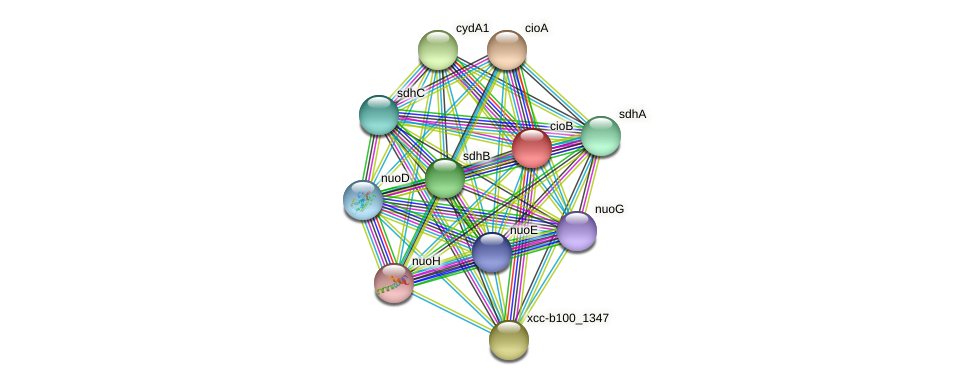 cioB protein (Xanthomonas campestris campestris) - STRING interaction network