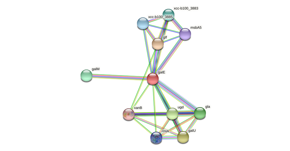 galE protein (Xanthomonas campestris campestris) - STRING interaction network