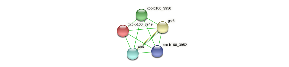 XCC3767 protein (Xanthomonas campestris campestris) - STRING interaction network