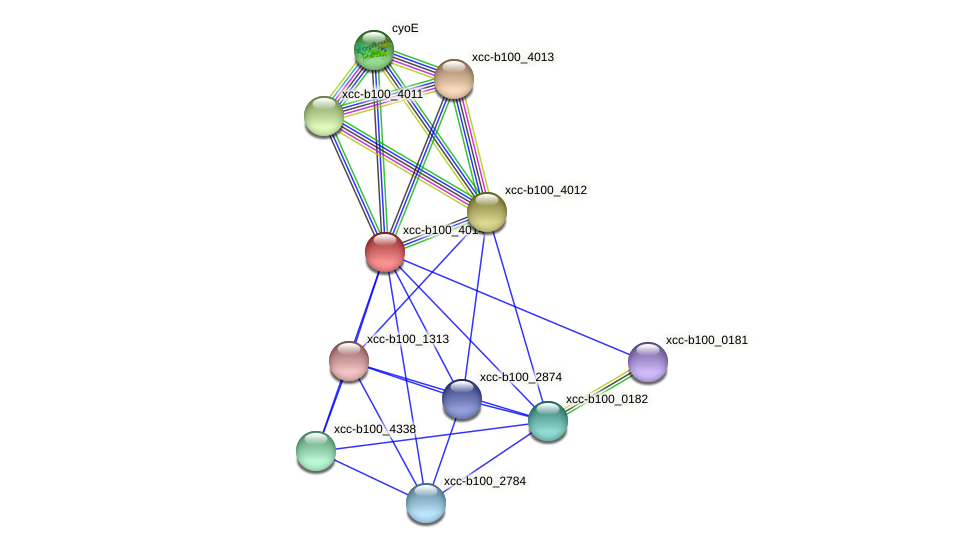 XCC3828 protein (Xanthomonas campestris campestris) - STRING interaction network