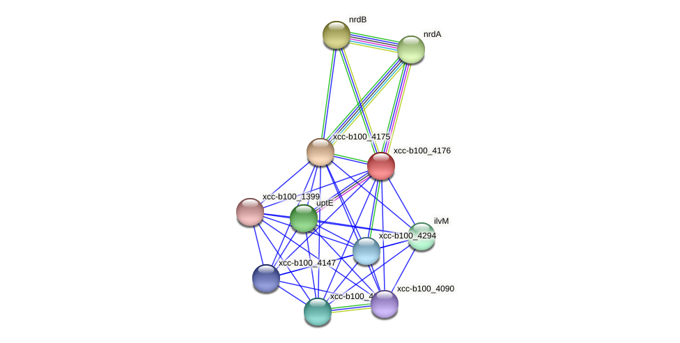 XCC3984 protein (Xanthomonas campestris campestris) - STRING interaction network