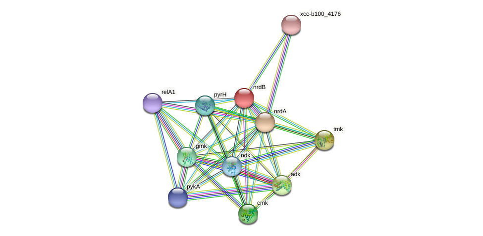 nrdB protein (Xanthomonas campestris campestris) - STRING interaction network