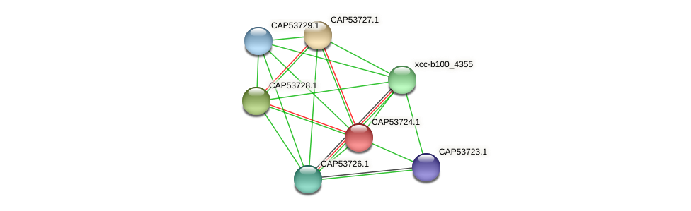 CAP53724.1 protein (Xanthomonas campestris campestris) - STRING interaction network