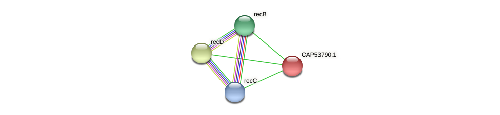 CAP53790.1 protein (Xanthomonas campestris campestris) - STRING interaction network