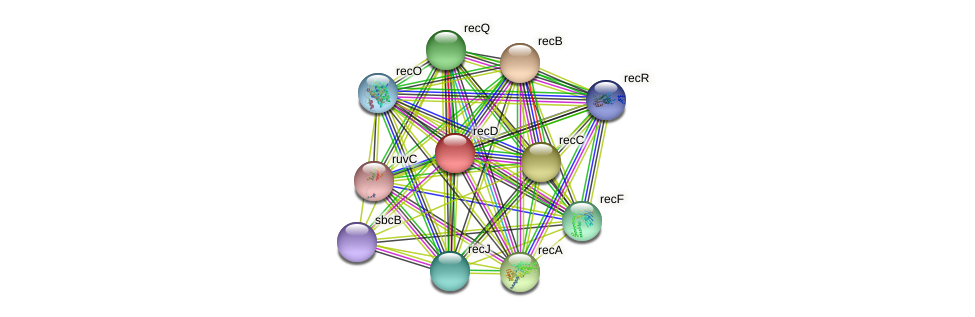 recD protein (Xanthomonas campestris campestris) - STRING interaction network
