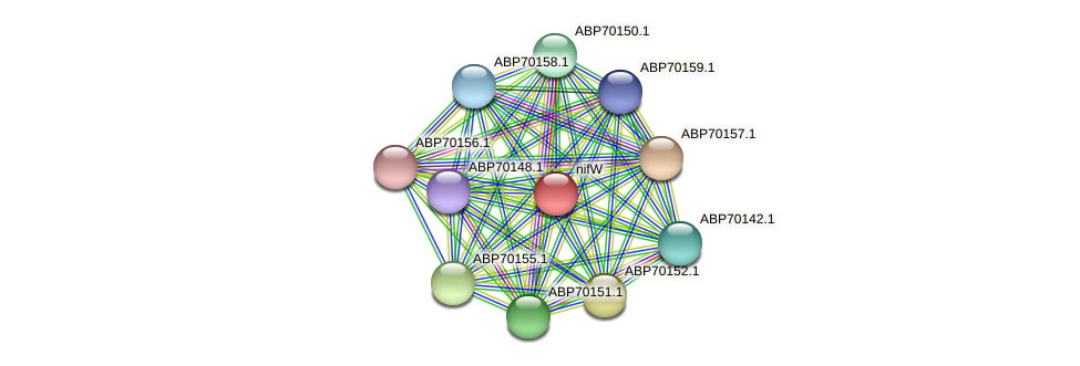 nifW protein (Rhodobacter sphaeroides ATCC17025) - STRING interaction network