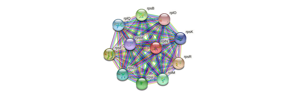 rplN protein (Rhodobacter sphaeroides ATCC17025) - STRING interaction network