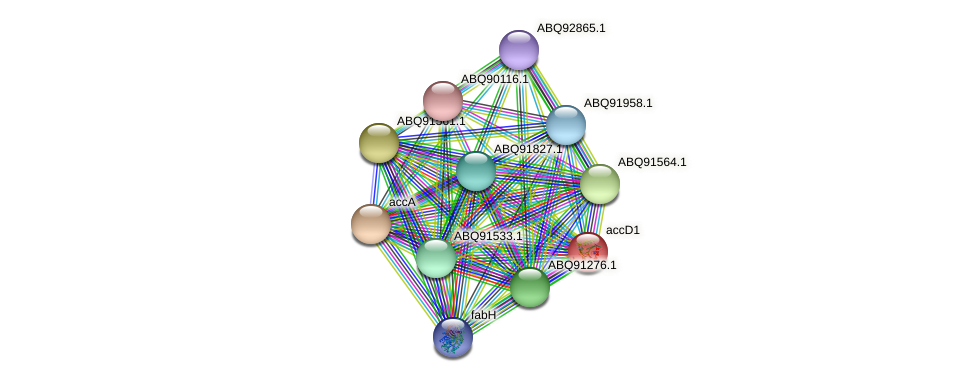 accD1 protein (Roseiflexus sp. RS1) - STRING interaction network