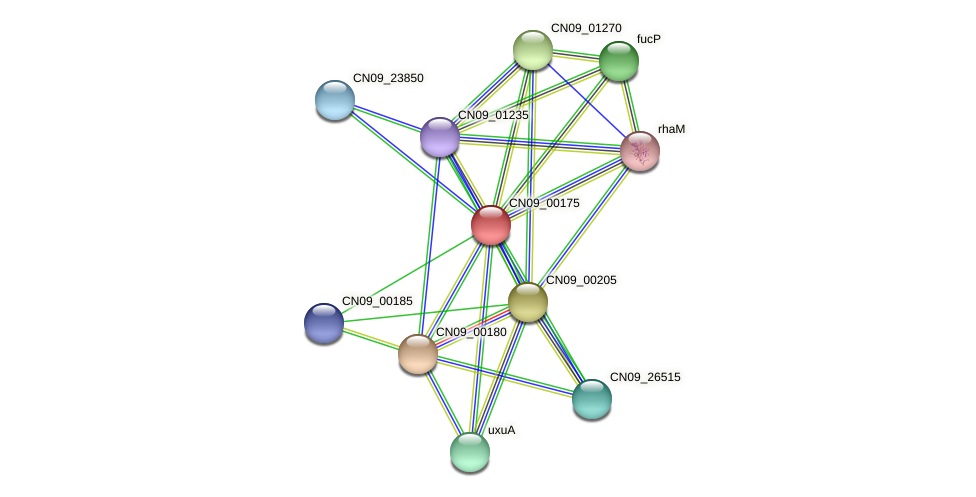 CN09_00175 protein (Agrobacterium rhizogenes) - STRING interaction network