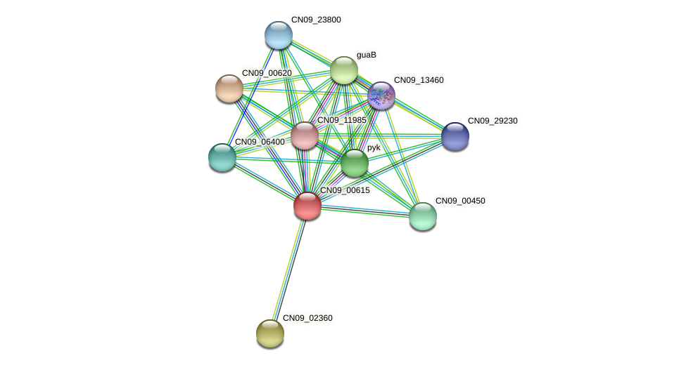 CN09_00615 protein (Agrobacterium rhizogenes) - STRING interaction network