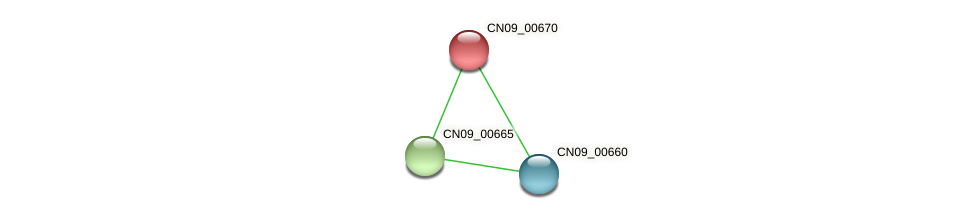 CN09_00670 protein (Agrobacterium rhizogenes) - STRING interaction network