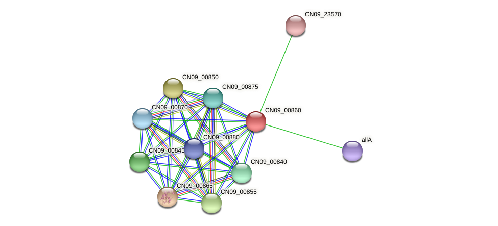 CN09_00860 protein (Agrobacterium rhizogenes) - STRING interaction network