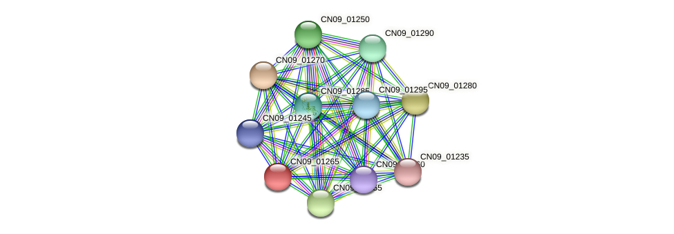 CN09_01265 protein (Agrobacterium rhizogenes) - STRING interaction network