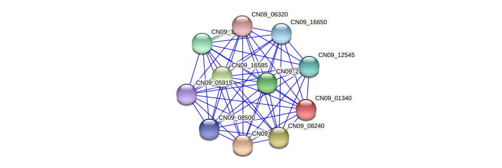 CN09_01340 protein (Agrobacterium rhizogenes) - STRING interaction network