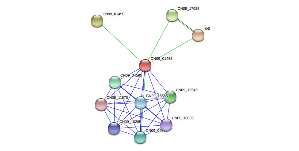 CN09_01485 protein (Agrobacterium rhizogenes) - STRING interaction network