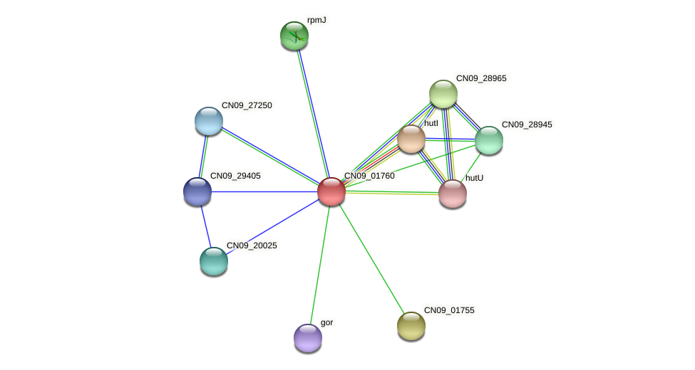 CN09_01760 protein (Agrobacterium rhizogenes) - STRING interaction network
