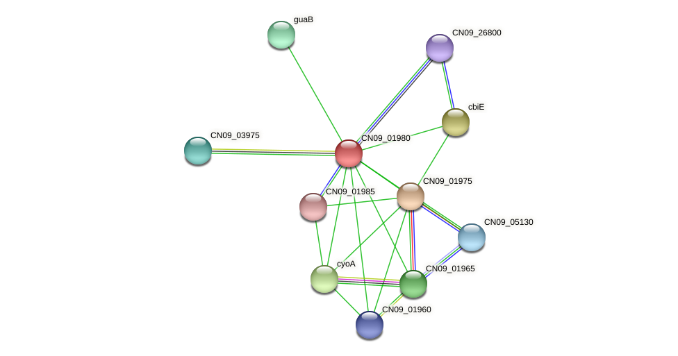 CN09_01980 protein (Agrobacterium rhizogenes) - STRING interaction network