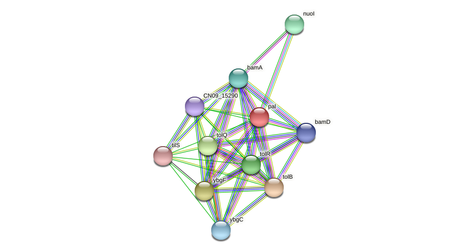 CN09_02400 protein (Agrobacterium rhizogenes) - STRING interaction network