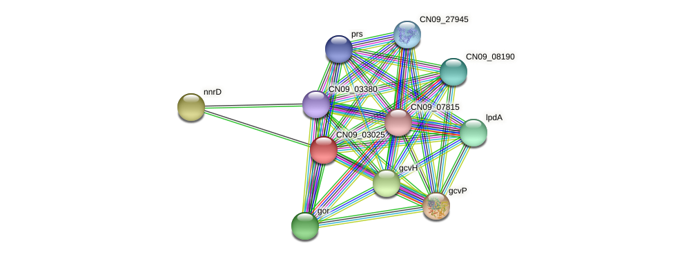 CN09_03025 protein (Agrobacterium rhizogenes) - STRING interaction network