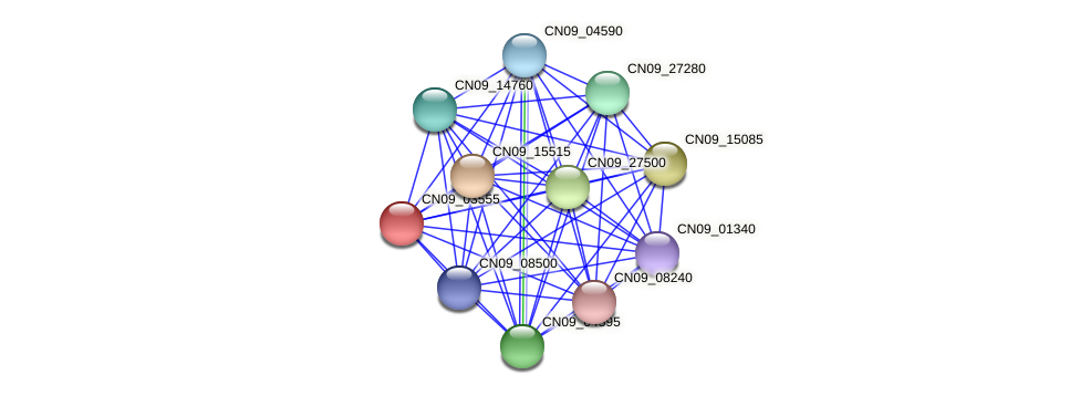 CN09_03555 protein (Agrobacterium rhizogenes) - STRING interaction network