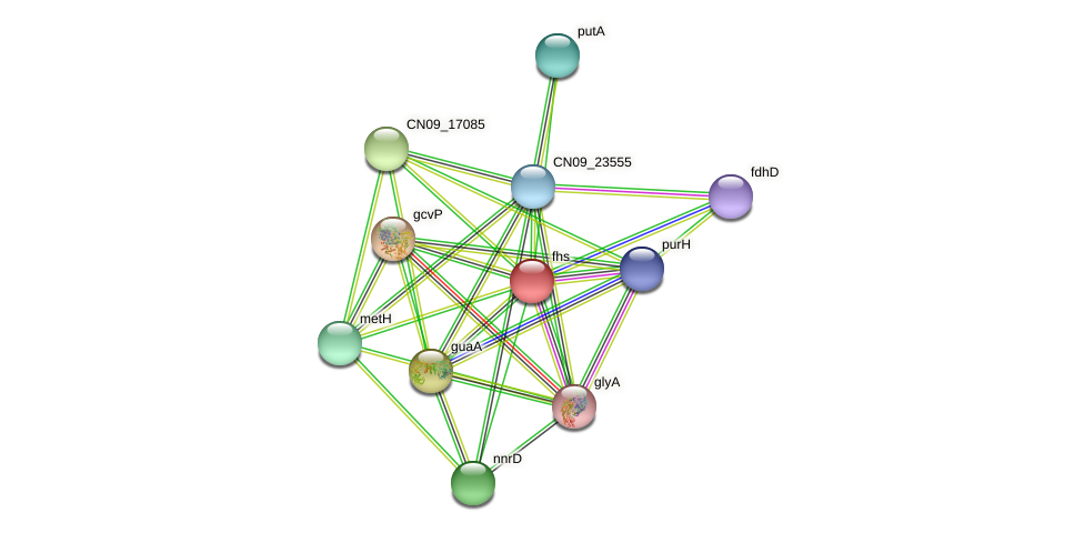 fhs protein (Agrobacterium rhizogenes) - STRING interaction network