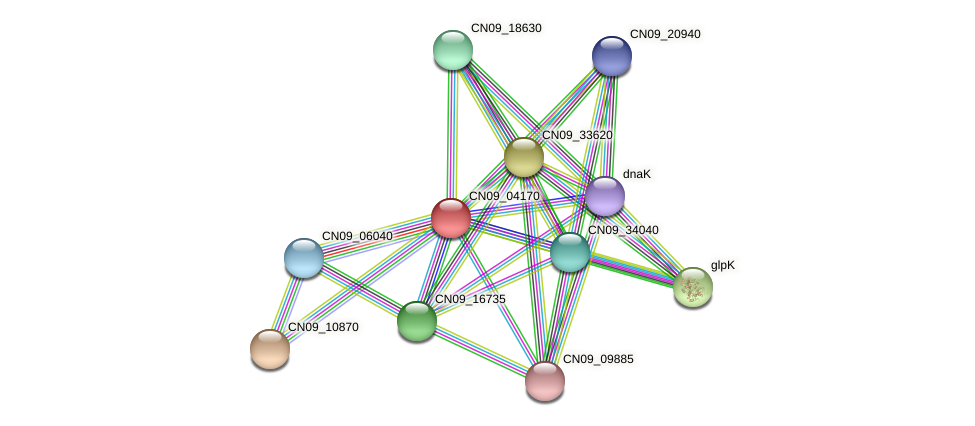 CN09_04170 protein (Agrobacterium rhizogenes) - STRING interaction network